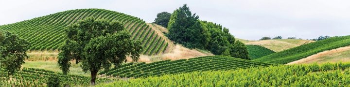 California: The Wine Country 1