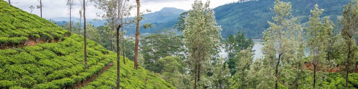 Sri Lanka: Ancient Temples & Tea Trails 2