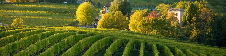 Italy: Piedmont 2