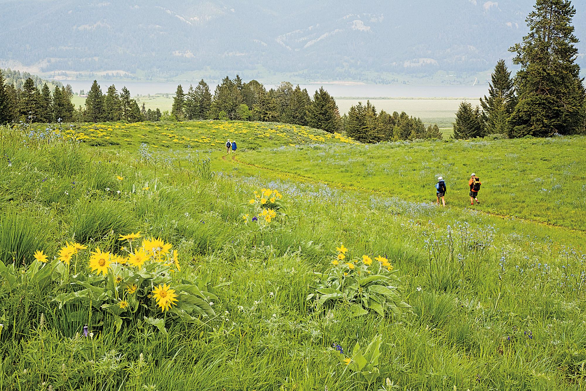 Montana & Wyoming: Yellowstone 1