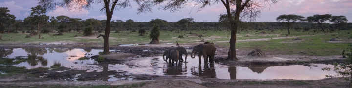 elephants in a pond