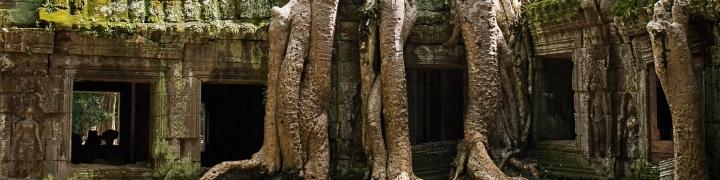 giant tree in Cambodia