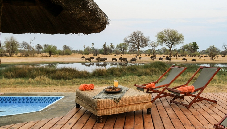 Eight Surprising and Unusual Safari Questions, Answered 4