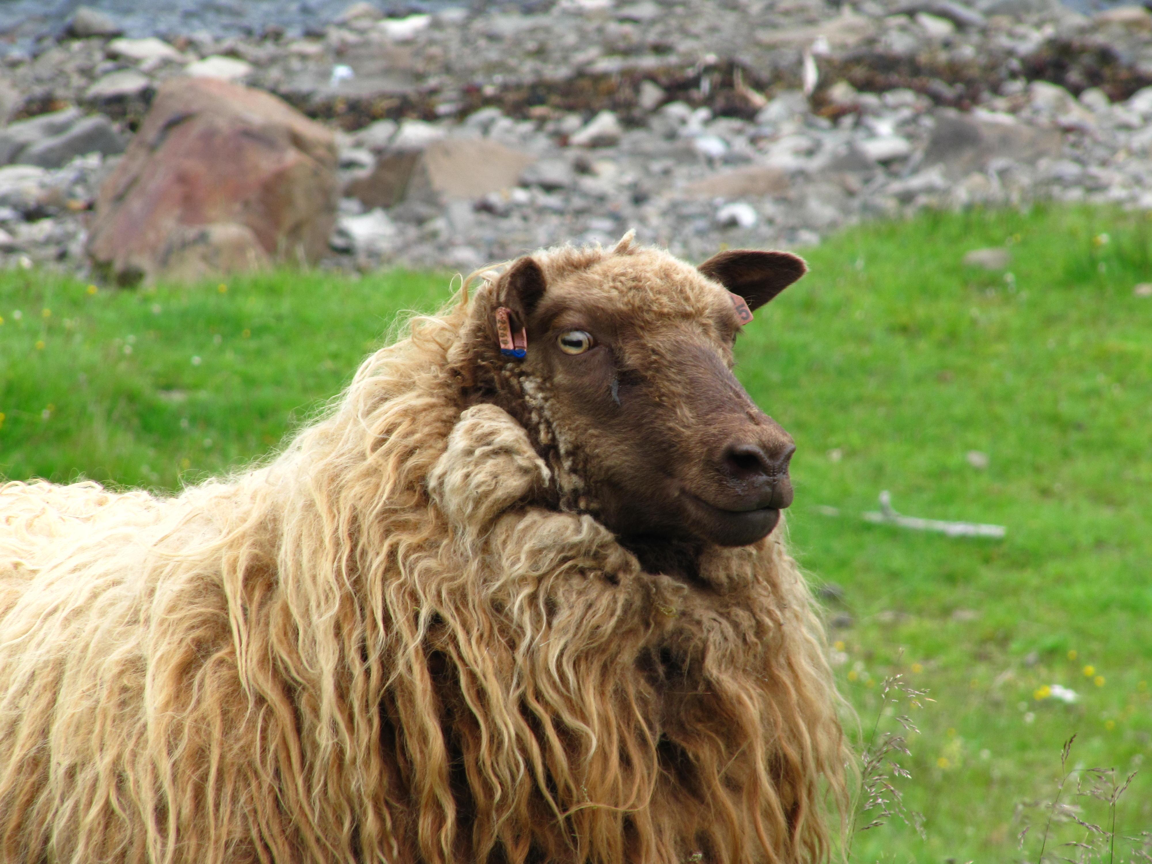 Kind and Lamb