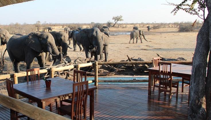 Nehimba lodge deck with elephants