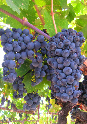 california-grapes