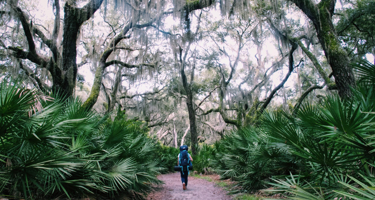 escape into nature on little st simons island