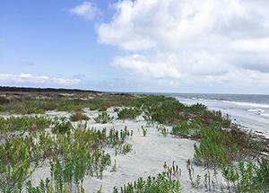 Birding on Georgia Beach