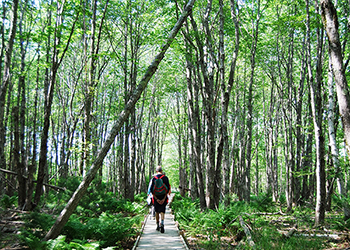 Jessups Path in Acadia