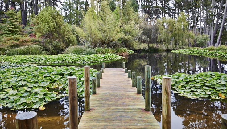 a dock out onto a shallow pond with lily pads