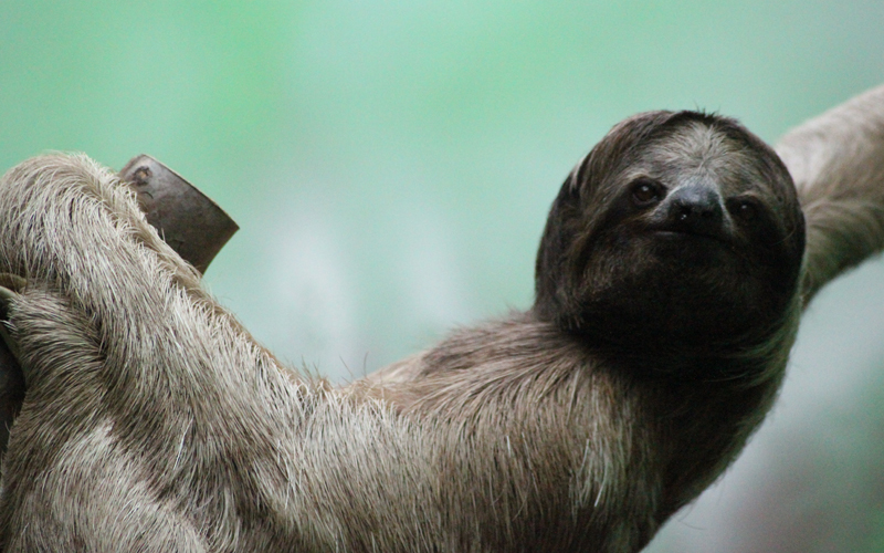 sloth-use