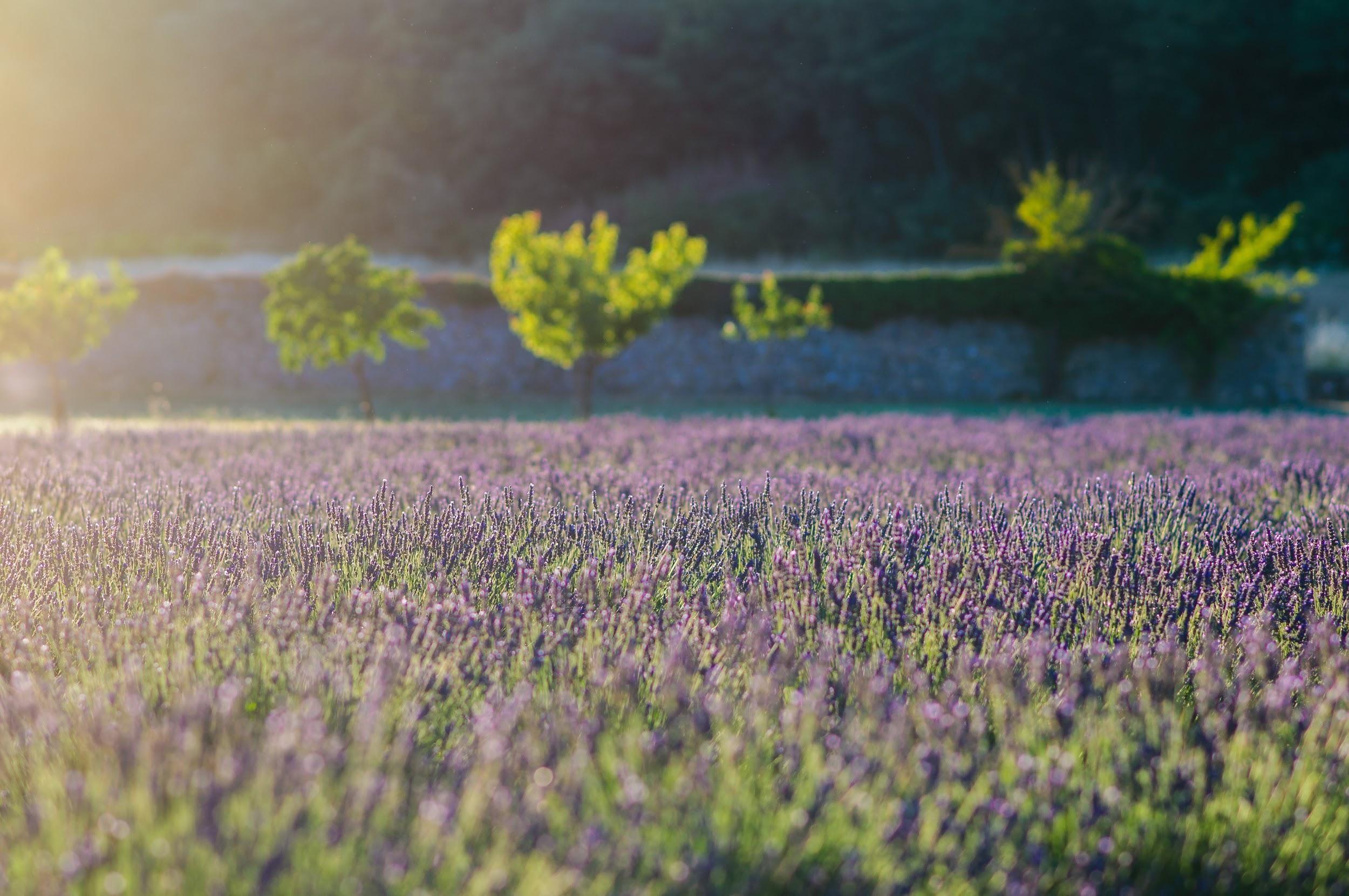 Printemps in Provence