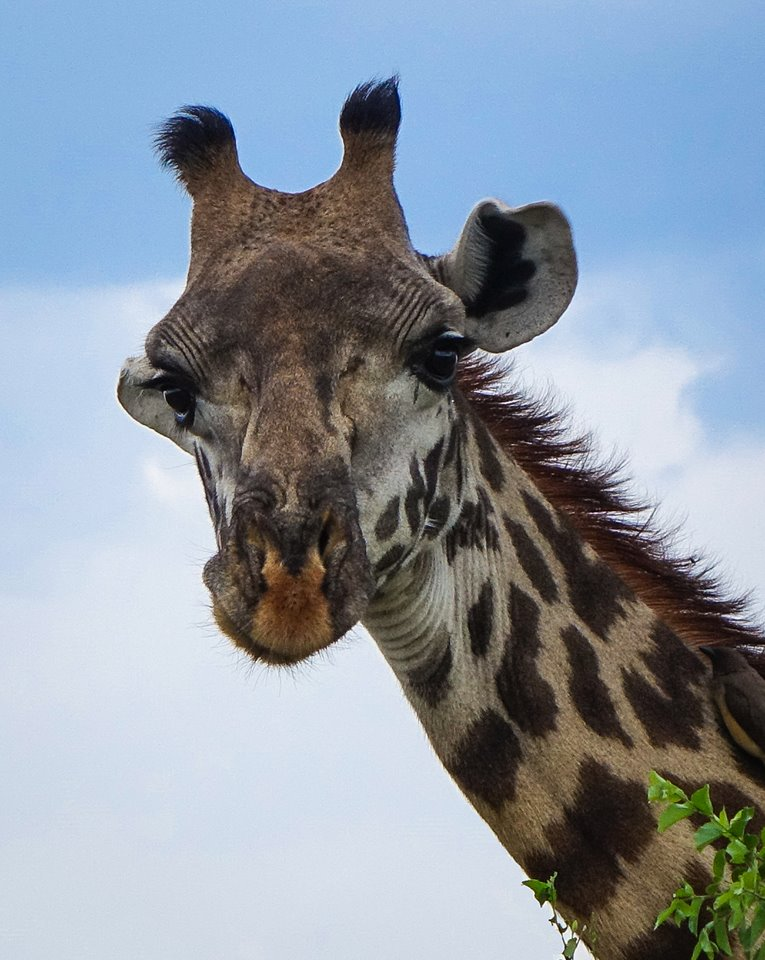 western serengeti, tanzania