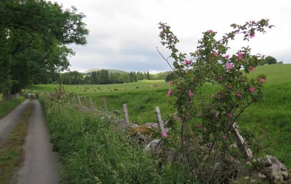 Scotland: The Highlands