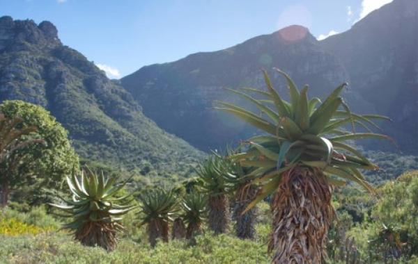South Africa Safari: The Cape & Kruger National Park