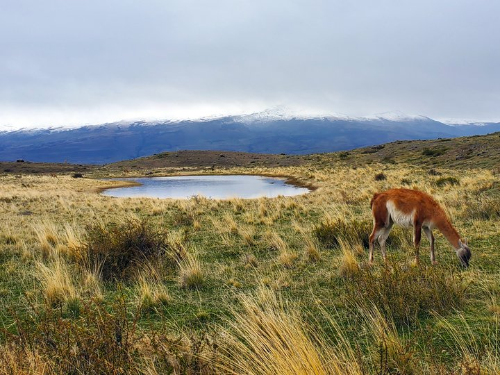 Wildlife of Patagonia 1